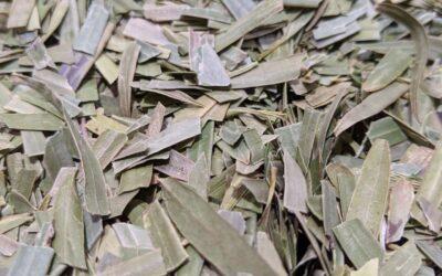 Native Teas